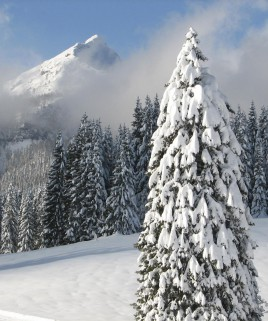 Snow Covered Pine Scented Candle